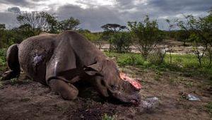 Verbatim's Brent Stirton Named Wildlife Photographer of the Year 2017