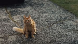 NZ Post and Three-Timing Feline Have Local Neighbourhood Covered