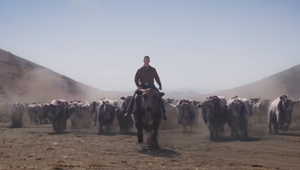 John Cena Leads a Stampede of Purple Cows in Experian Spot