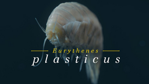 Scientists Name Deep Sea Creature to Highlight Plastic Pollution Crisis
