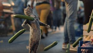 Strutting Cat is Walking Tall in Vanquis Bank Campaign