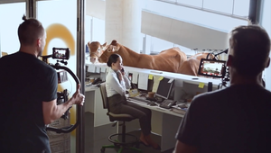 Cows Invade an Airport in Spot for WestJet