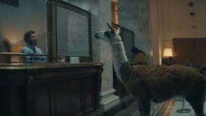 Bosh - Llama